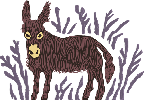 Miniature Donkeys for Wellbeing