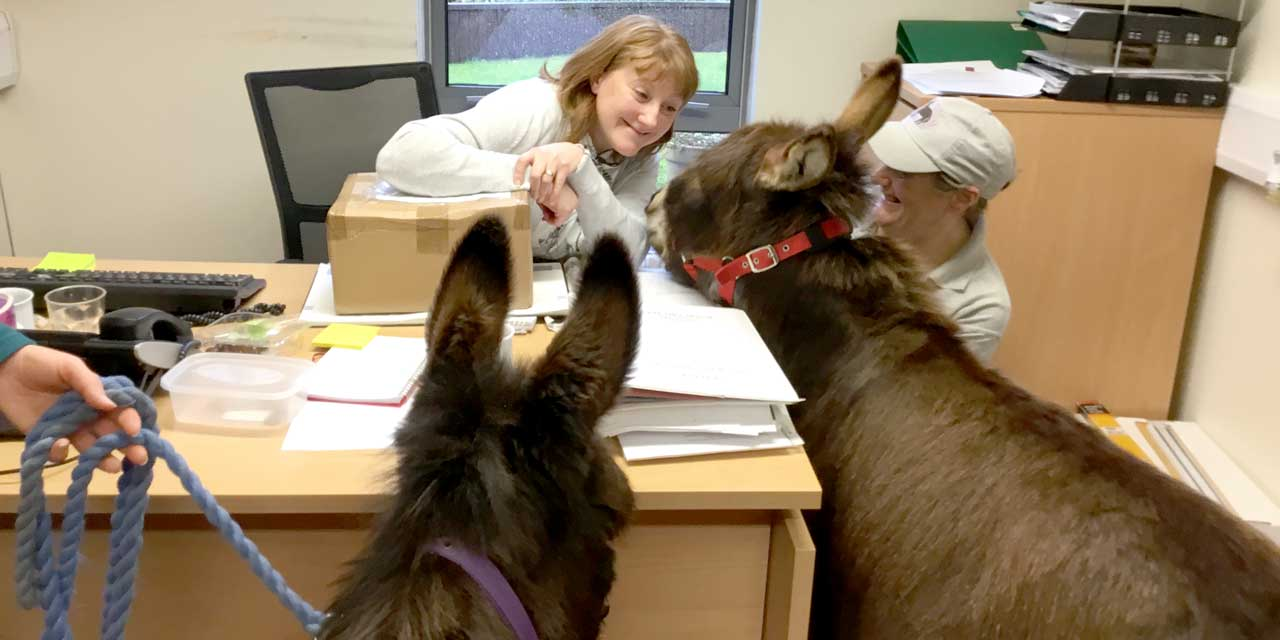 Office Donkeys