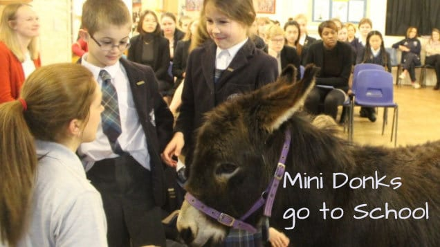 Mini Donks go to School
